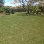 The Best Lawn Turf in Hesketh Bank