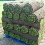 Turf Suppliers in Buckshaw Village